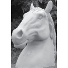 Animals - Large Horses Head